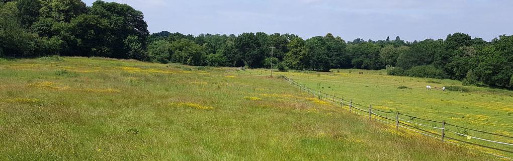 Knowle-Park-Horse-Field-Header-1020x320.jpg